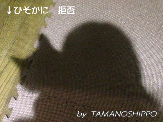 嫌がる猫(ちび)影
