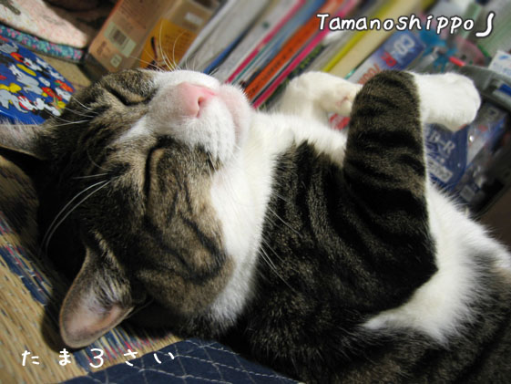 気持ち良さそうに寝る猫(たま)