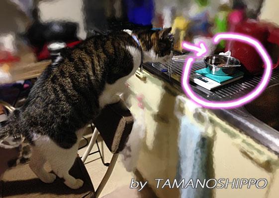 缶詰めだと思って期待する猫(ちび 台所)