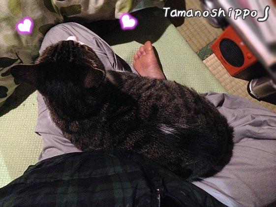 膝の上に座る猫(ちび)