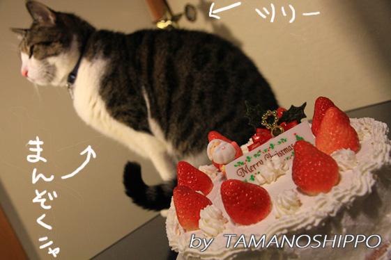 クリスマスケーキ、じゃまをする猫(ちび)