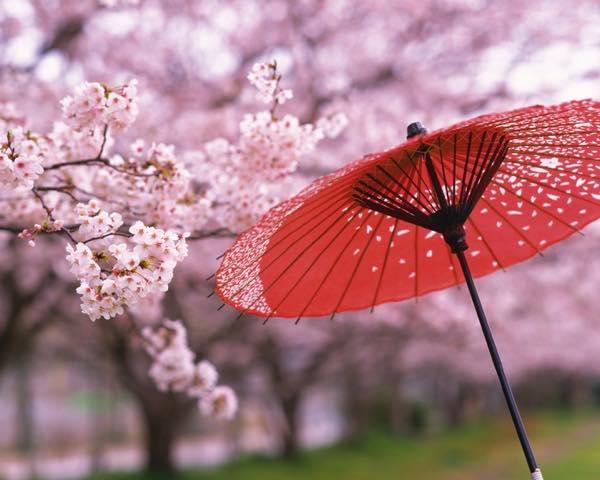 日本の春0314
