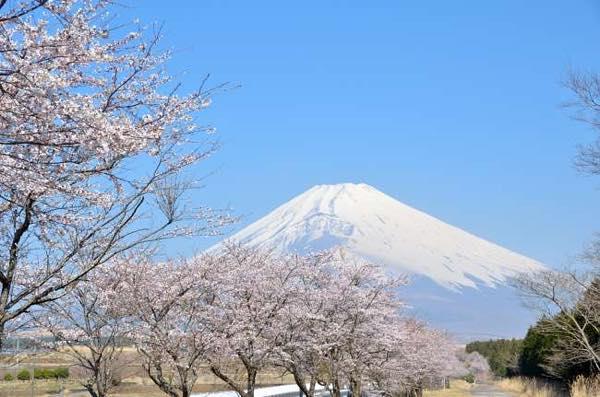 春の富士山img_1