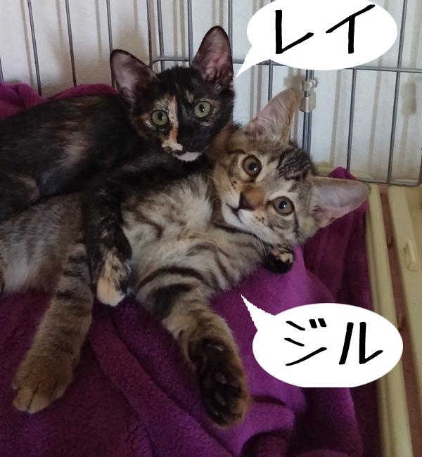 PIC_dnRewd.jpg