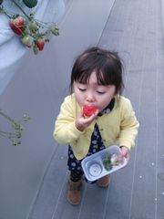 [写真]ゆづきちゃんが大粒いちごをパクッと食べているところ