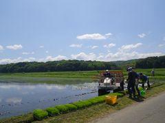 [写真]受付ハウス前の田んぼで、のぶ子さんご家族が田植え作業をしている様子