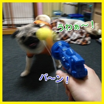 IMG_1103-1.jpg