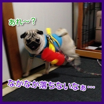 IMG_4798-1.jpg