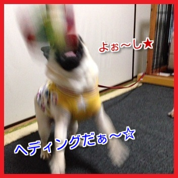 IMG_5188-1.jpg