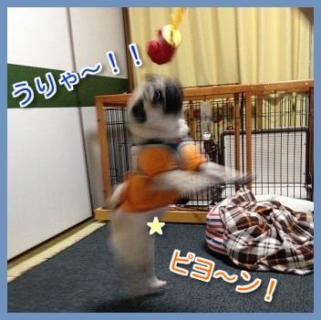 IMG_7336-1.jpg
