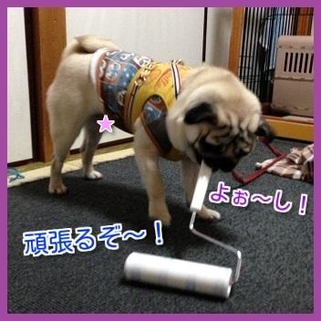 IMG_9607-1.jpg