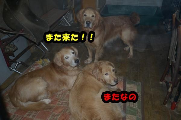 DSC_2784_20150102223537577.jpg