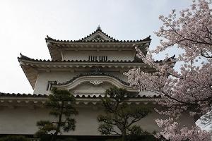 15丸亀城桜9