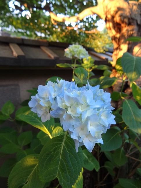 茶道教室の日常 出藍の誉れ