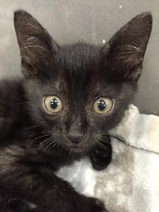 黒猫(Y) image1