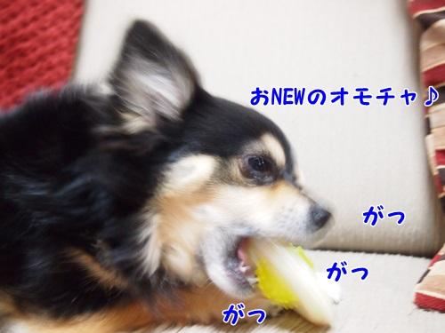 P2211927.jpg