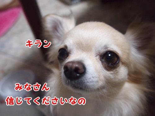 P4100937.jpg