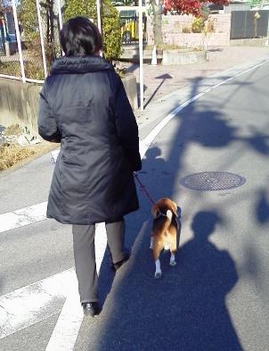 朝夕に50分間ずつの散歩を…