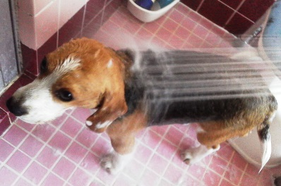 20日ぶりのお風呂(シャワー)にTAROは大喜び!