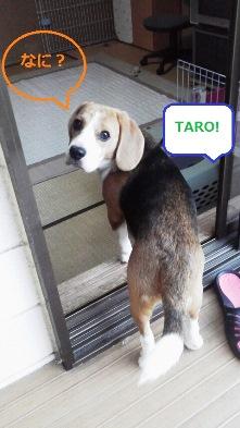 TARO,留守番の時はゴメンネ…。