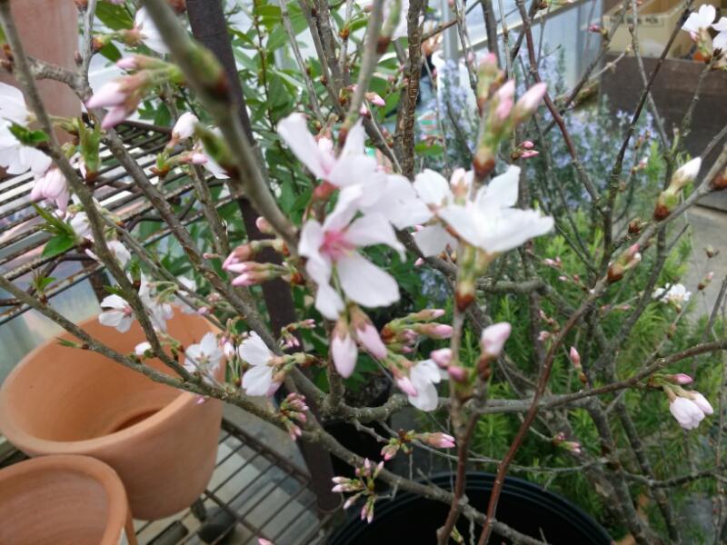 折れた枝から花