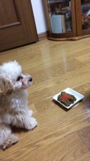 トマト食べれたよ