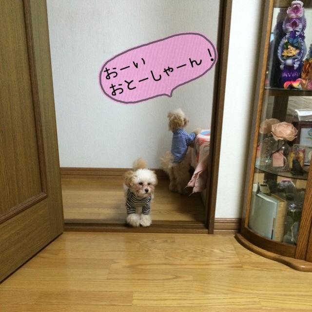 おとーしゃーん!はやくぅ~
