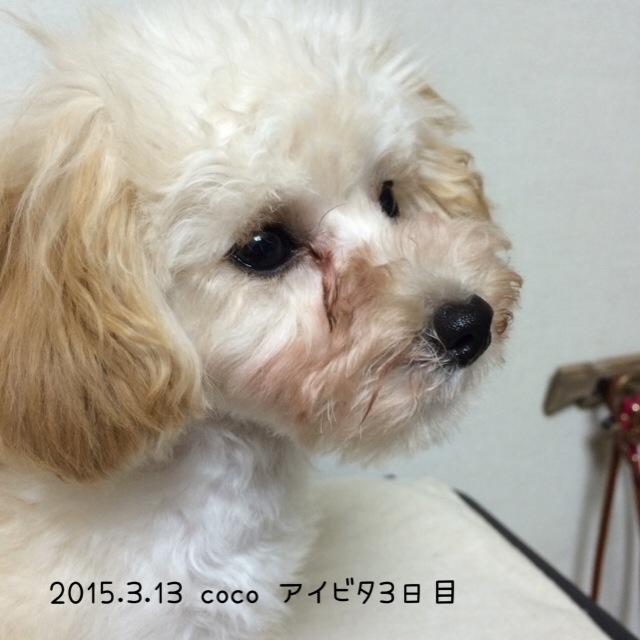 2015.3.13ココアイビタ3日目