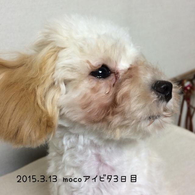 2015.3.13モコアイビタ3日目