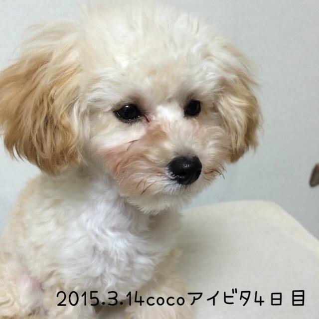 2015.3.14ココアイビタ4日目