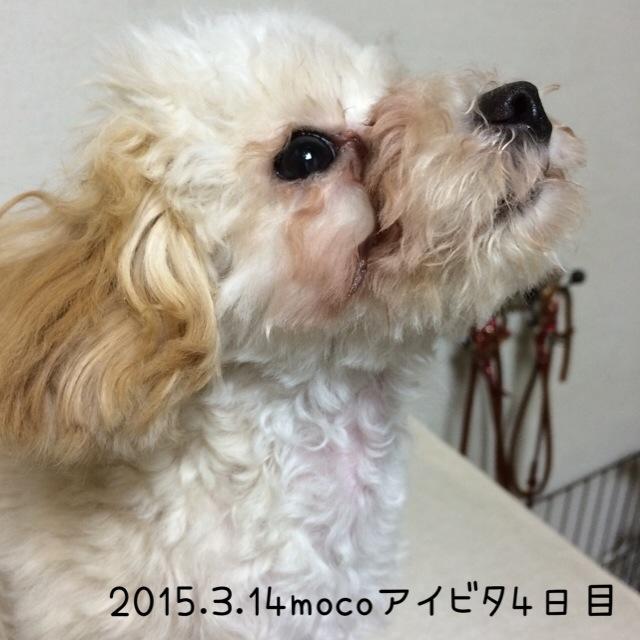 2015.3.14モコアイビタ4日目