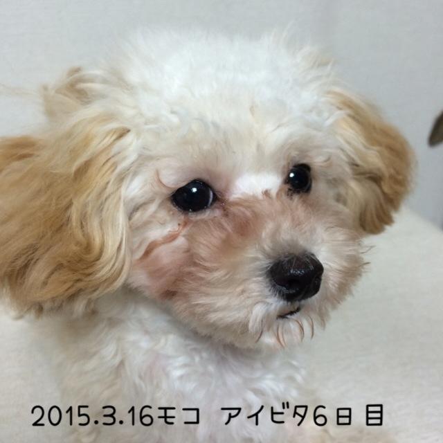 2015.3.16モコアイビタ6日目