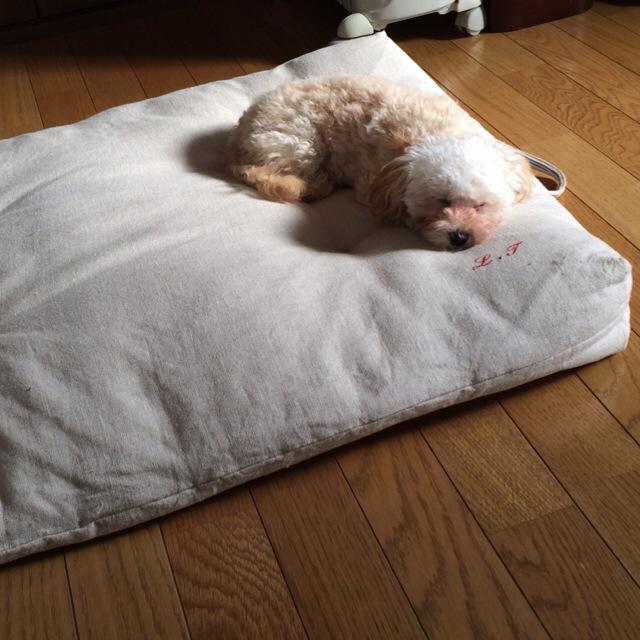 2015.3.22モコお昼寝