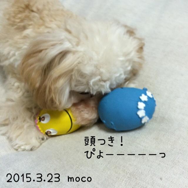 モコ!たまごちゃんを頭突き