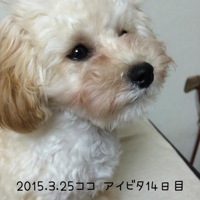 2015.3.25 ココ アイビタ14日目