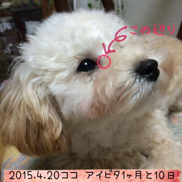 2015.4.20 アイビタ開始1ヵ月10日ココ