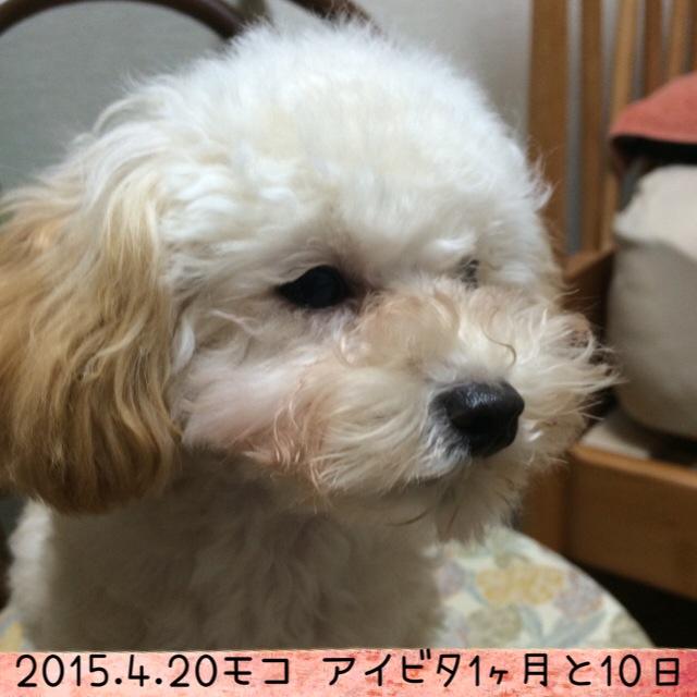 2015.4.20 アイビタ開始1ヵ月10日モコ
