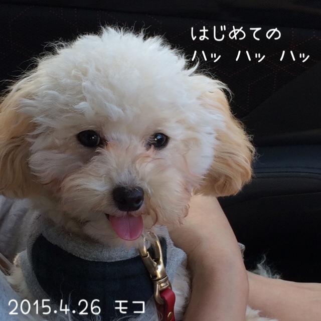 犬っぽい(笑)