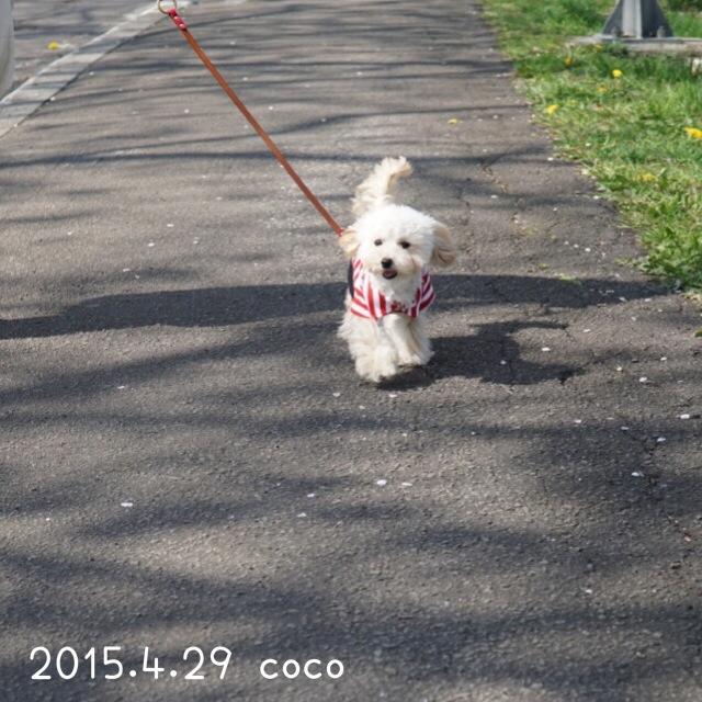 2015.4.29 北斗市お散歩ココ