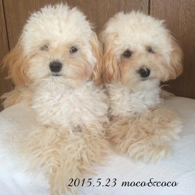 2015.5.23 モコ&ココ8ヶ月