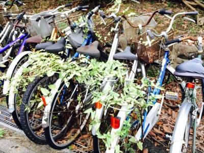 ツタのからまる自転車